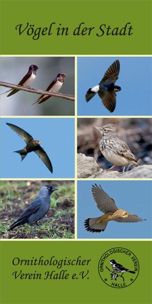 Faltblatt über OVH-Projekt Vögel in der Stadt